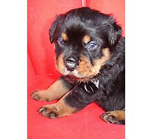 Cute Rottweiler Puppy With Food On Muzzle Photographic Print