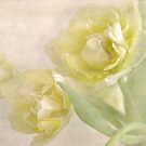 softly softly by Teresa Pople