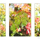 Virginia Creeper by AlysonArtShop