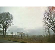 there was a beautiful forest here once...   Photographic Print