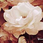 White Beauty Rose by Winona Sharp