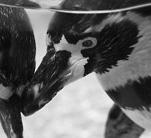 Penguin Love by Tamara Al Bahri