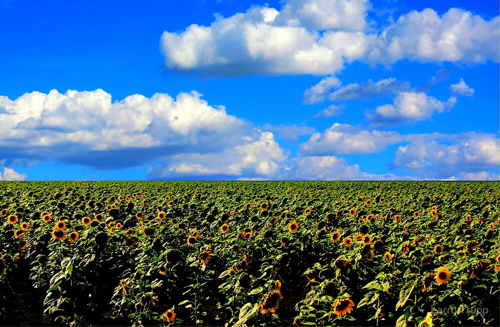 Sunflower Maze by Larry Trupp