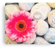 Pink flower and zen stone Canvas Print