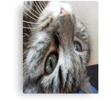 Baby Cat Montes Upside Down Metal Print