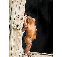 Baby orang utan Photographic Print