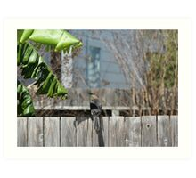 Grackel on a Fence Art Print