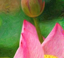 Pink Lotus  Flower by Adam Asar