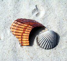Seashells on the Seashore by Eva Kato