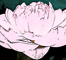 pink water lilly by Adam Asar