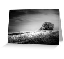 Where The Wild Winds Blow Greeting Card