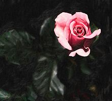 single pink rose by Adam Asar