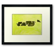 herd of cows relaxing in lush pasture Framed Print
