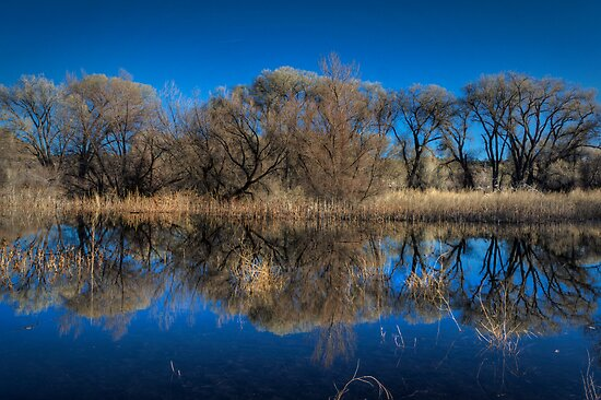 Marsh Lines by Bob Larson