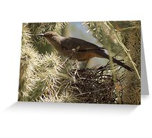 Curved-bill Thrasher ~ Nesting 2013 Greeting Card