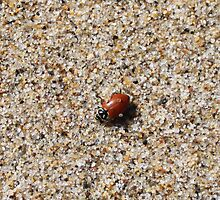 Sandy Beetle by growley