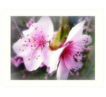 Gentle Pink Blossom of the Nectarine Tree Art Print