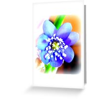 Hepatica closeup Greeting Card