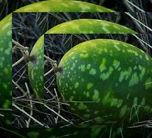 Paddy Melon Moon (or St Patrick's Weed) by myraj