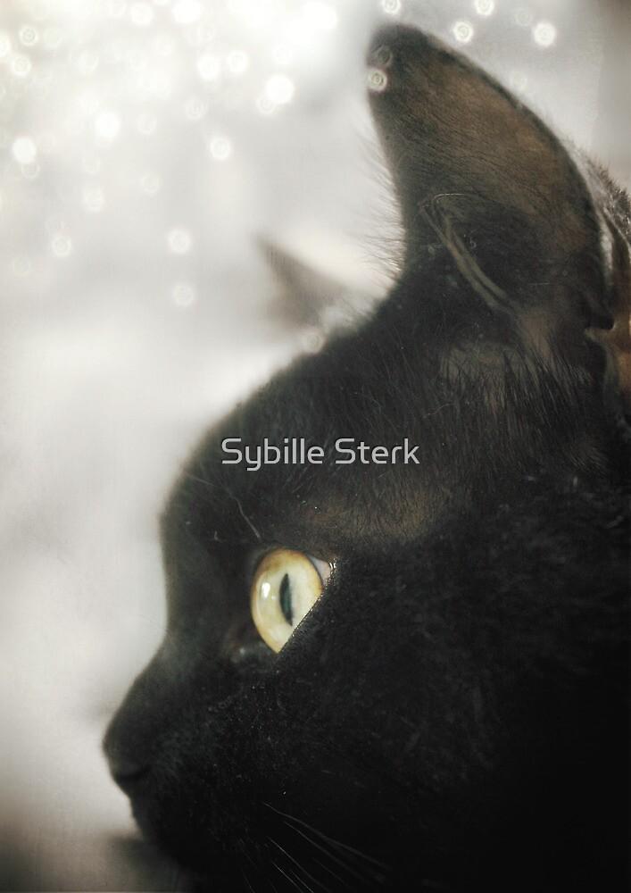 The Black Cat (Sammie) by Sybille Sterk