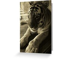 I will always stand up and fight for what I believe in....Freedom Greeting Card