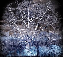 Tree with cormorants, infrared by Wendy  Rauw