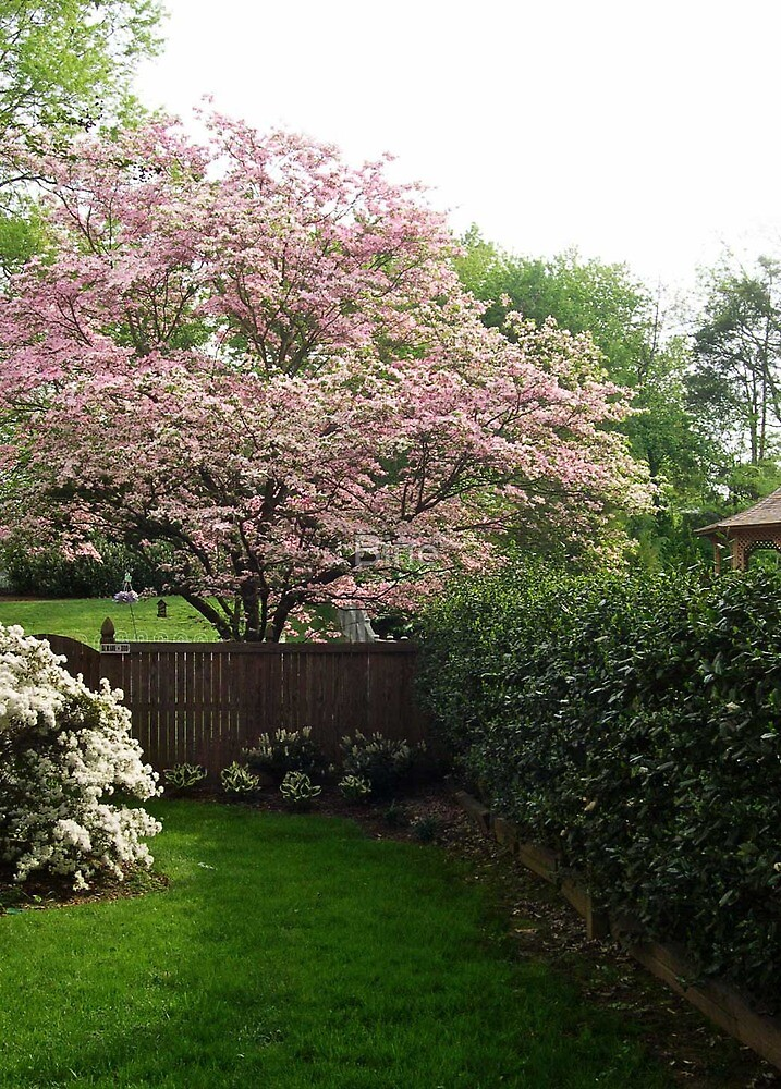 Springtime in our Yard by Bine