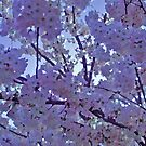 In the Shadow of Lavender Blossoms by Jane Neill-Hancock