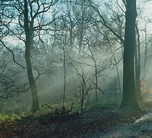 Mist In The Woods 2 by Robbie Patterson
