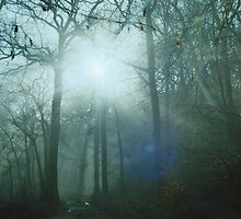 Mist In The Woods 7 by Robbie Patterson