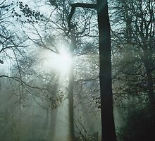 Mist In The Woods 8 by Robbie Patterson