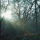 Mist In The Woods 9 by Robbie Patterson