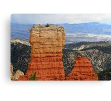 Tree on top of the rock,Bryce Canyon National Park,Utah Canvas Print