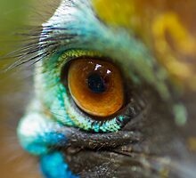 The Eye of the Cassowary by geochro