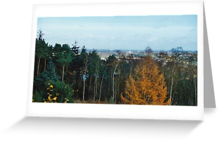 View Point Of Birmingham From The Lickey Woods 3 by Robbie Patterson