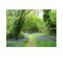 Spring In The Woods Art Print
