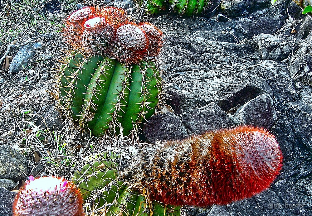 Prickly   by globeboater