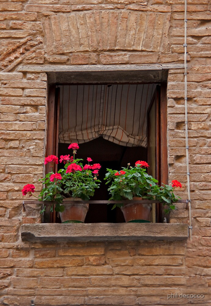 Two Geraniums by phil decocco