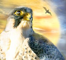Falcon Sun by Carol  Cavalaris