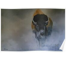 Bison in the mist Poster