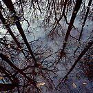 Mirror, Mirror by Christine Annas