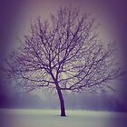 Icy Tree by Matthew H