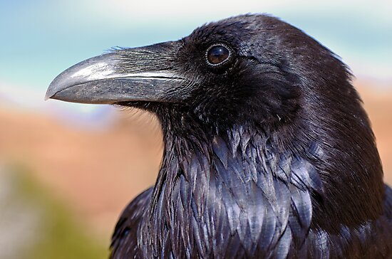 Raven by Stephen Beattie