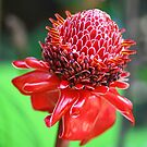 Red Ginger Flower by John Keates