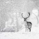 A Stag In The Snow by Patricia Jacobs CPAGB LRPS BPE4