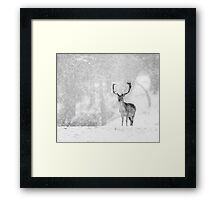 A Stag In The Snow Framed Print