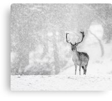 A Stag In The Snow Canvas Print
