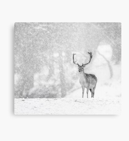 A Stag In The Snow Metal Print