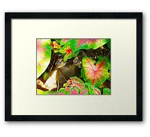 Kittie Cat Framed Print