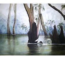 Pelican Swamp Photographic Print